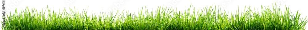 Fototapety, obrazy: Grass Isolated On White - Spring Border