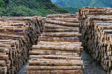 Stacks Of Pine Tree Logs In A New Zealand Port Ready For Export