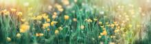 Buttercup Flower In Grass - Be...
