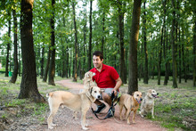 Dog Walker With Dogs Enjoying ...