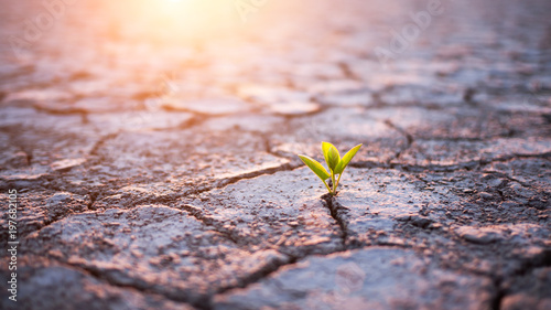 Poster Vegetal Green plant sprout in desert