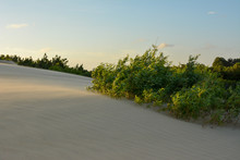 Sunlight Dune Grass At Jockey'...