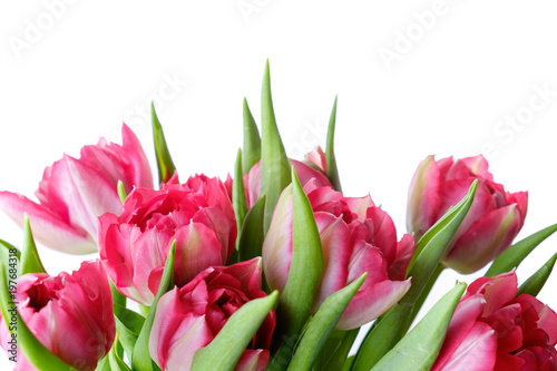 Foto op Plexiglas Tulp Bouquet of pink tulips on white background, isolate