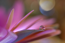 Abstract Macro Photo With Wate...