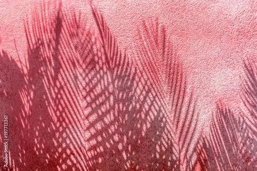 ombres de palmes sur mur en crépi rouge