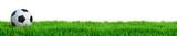 Fußball auf Rasen Panorama isoliert weißer Hintergrund 3D Rendering