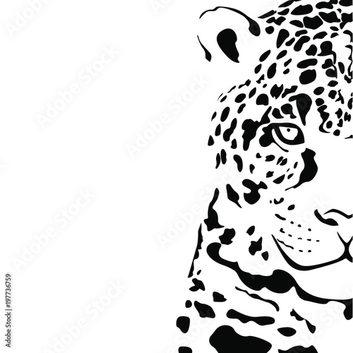Fotografia Black and white vector sketch of a half of a head of a Jaguar