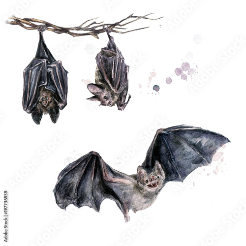 Poster Watercolor Illustrations Bats. Watercolor Illustration.