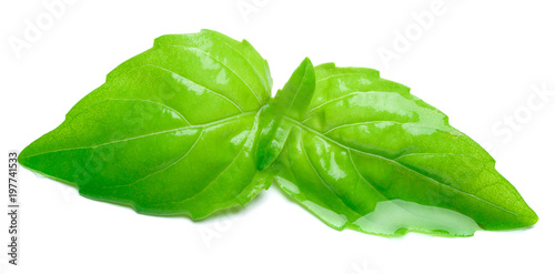 studio shot of fresh green basil herb leaves on white background. Clipping path #197741533