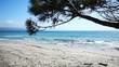 Pine tree by the sea in Le Bombarde beach, Alghero. Sardinia, Italy