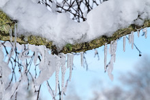 Ice Clinging To Branches Isola...