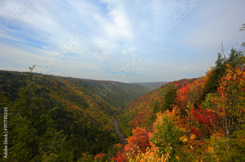 Blackwater gorge in fall Canvas Print