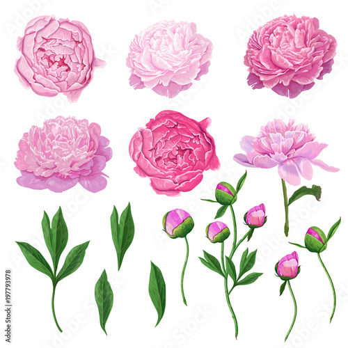 Foto  Floral Elements Set with Pink Peony Flowers, Leaves and Buds