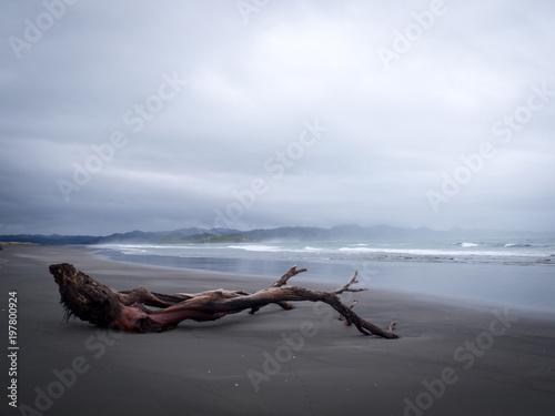In de dag Zwart Moody Beach Driftwood Landscape
