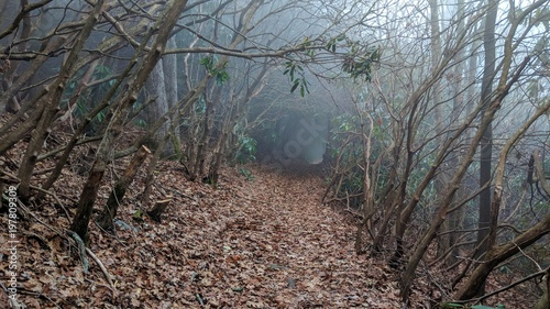 Photo Appalachian Trail Tunnel in the Fog