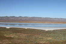 Superbloom Carrizo Plain National Monument