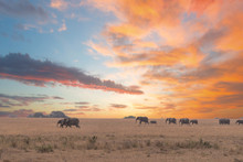 Herd Of Elephants In Serengeti...