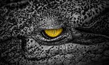 The Terrifying Eye Of Crocodil...