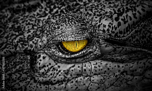 Fotobehang Krokodil The terrifying eye of crocodile a large aquatic predatory reptiles like aligator