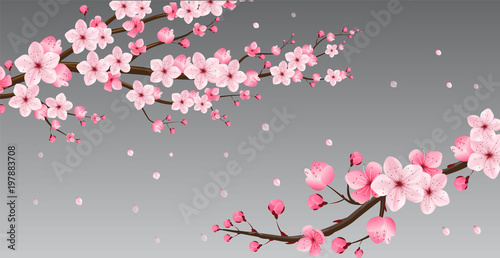 Fotografie, Obraz cherry blossom collection , greeting cards , seamless texture , japanese floral