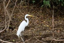 Colorful Birdlife Of Costa Rica