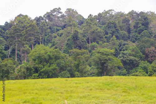 Tuinposter Khaki Khao Yai National Park Thailand