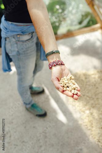 Papiers peints Amérique du Sud Hand of a woman showing dried coffee beans in a greenhouse