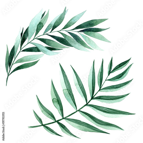 Foto  Watercolor illustration of fern leaves