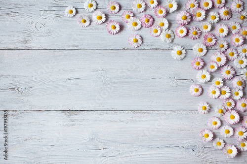 Foto op Canvas Madeliefjes Wooden light spring-summer background with daisies