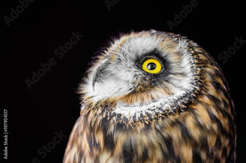 Obraz na plátně Owl gazing