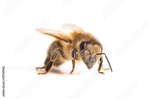 In de dag Bee Bee on white background
