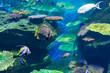 アクアリウム・熱帯魚・海・珊瑚