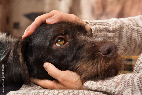 Spoed Foto op Canvas Hond hands of owner petting a dog
