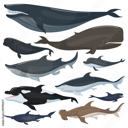 Plakat  Whales, dolphins sharks and other nautical mammals animals