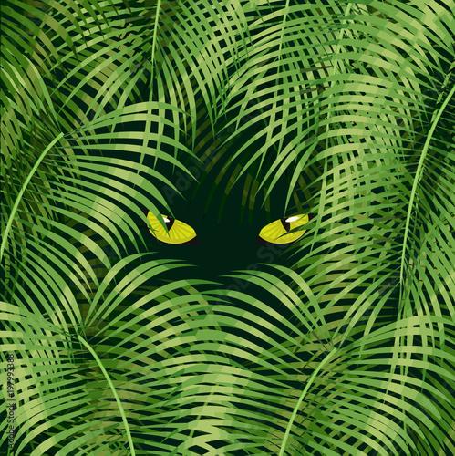Aluminium Prints Rice fields Wild cat eyes