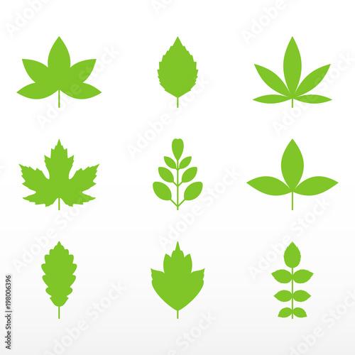 Fototapeta Green leaf set. Growth symbol icon. obraz na płótnie