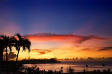 Silhouettes Of Palm Trees Agai...