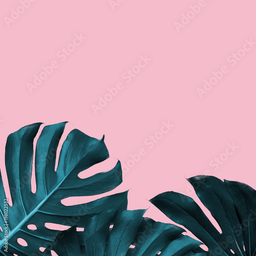 Tropical Leaves of monstera on a pink duotone background Wallpaper Mural