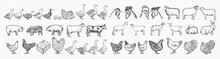 Farm Animals Collection. Hand Drawn Big Farm Animals Set Vector