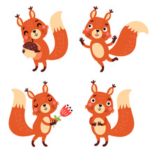 Squirrel, Vector Character