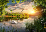 Fototapeta Landscape - Swan in the park