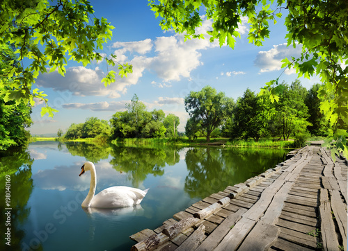 Poster de jardin Cygne Bridge on the river