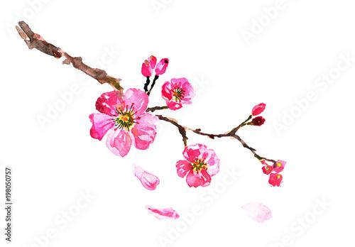 sakura tree  watercolor, cherry bloom