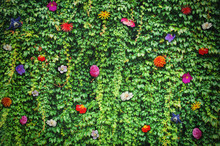 Beautiful Fairy Wall With Green Leaves And Flowers
