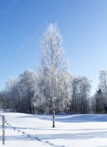 Beautiful winter wonderland wallpaper from Finland  Sunny and cold