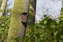 Bird Booth Hung On A Tree. Home For Birds.