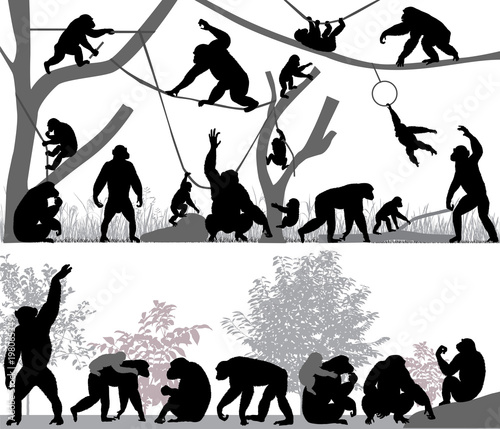 Silhouettes of chimpanzees and its cubs outdoors Tablou Canvas