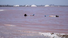 This Is Footage Of A Pink Salty Lake With Two People Floating In It, Treating Their Bodies And Relaxing.