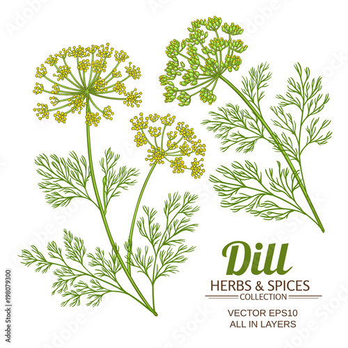Canvas dill plant vector set