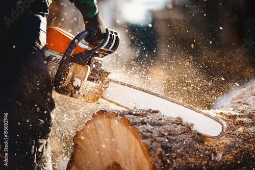 Chainsaw. Woodcutter saws tree with a chainsaw on sawmill